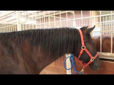 Michael & Horse II