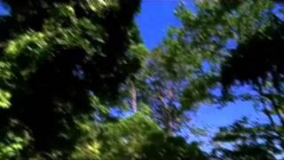 wisata alam pantai sukamade banyuwangi