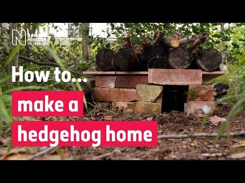 How to make a hedgehog house | Natural History Museum