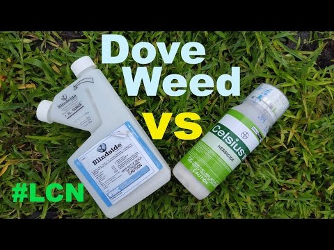 St Augustinegrass Doveweed Control: Blindside vs Celsius Her