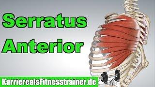 Serratus Anterior Ansatz Ursprung Funktion + Übungen für Serratus