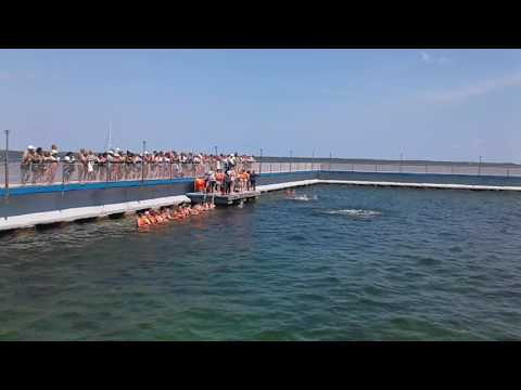 interactive swimming with dolphins varadero cuba
