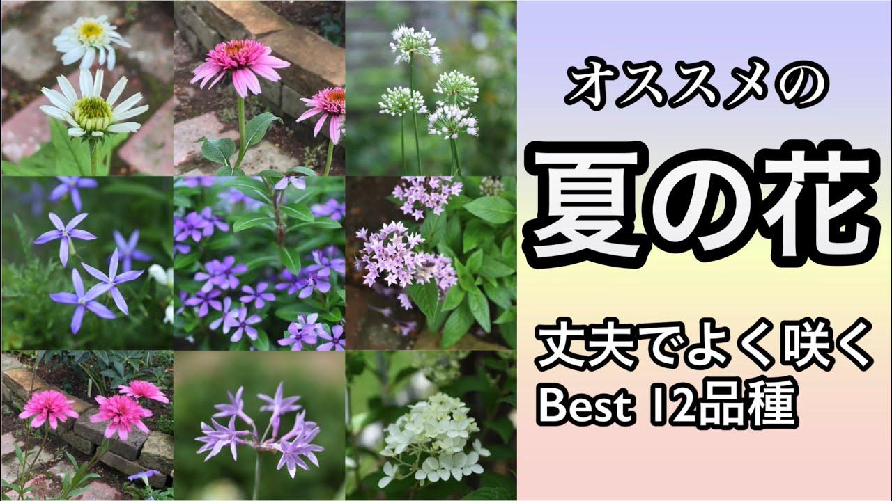 【夏の花壇にオススメ・暑さに強い花12選】
