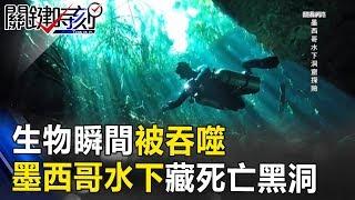 生物瞬間被吞噬!探險家發現墨西哥水下藏13000年「死亡黑洞」! 關鍵時刻 20170831-6 朱學恒 劉燦榮 黃創夏