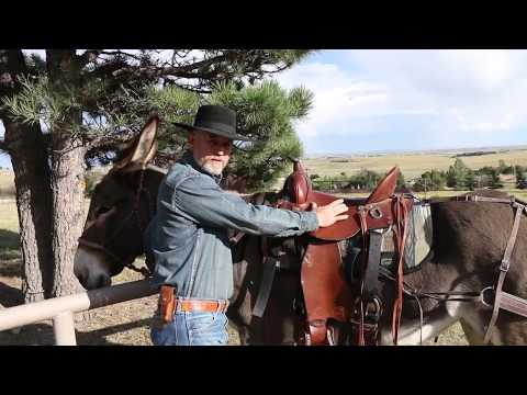 How to keep your Saddle Donkey comfortable