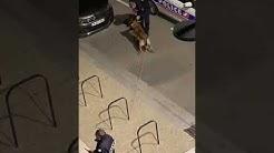 Une vidéo tournée à Toulouse laisse penser qu'un policier frappe gratuitement un homme.