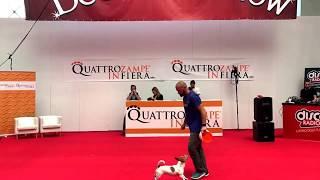 QuattroZampeinFiera: Adrian Stoica, campione mondiale di Disc Dog