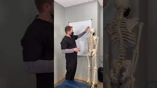 Chiropractic adjustment - what is actually happening?