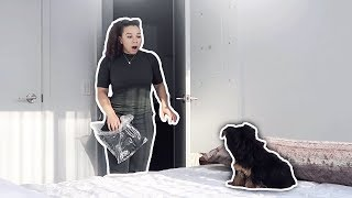 One of Deejdesign's most viewed videos: SURPRISING GIRLFRIEND WITH A PUPPY!! (GONE WRONG)