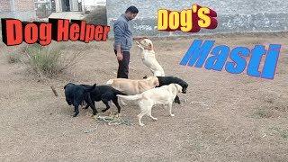 Dog Masti / Dog Helper