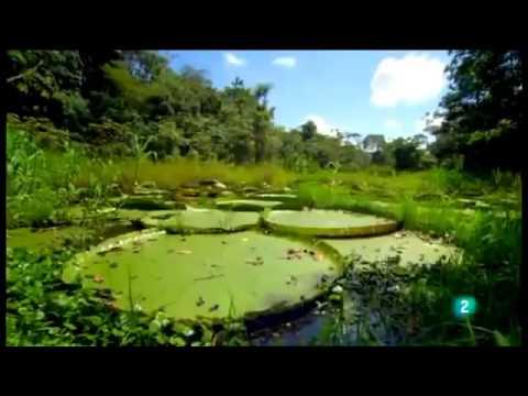Documental de Animales Salvajes de