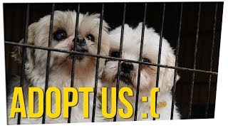 California First State to Ban Non-Rescue Pet Shop Sales ft. Gina Darling & DavidSoComedy
