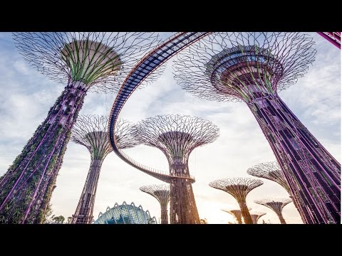 Gardens by the Bay Singapore Tour - Cloud Forest & Flower Dome, Supertrees Night Light Show, Skyway