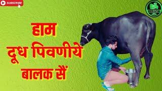Latest haryanvi status haryanavi 2018  Baby Da Swag  Raj Mawer  Mehar  haryanvi status haryanavi