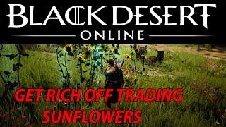 GET RICH in Black Desert Online Through Trading Sunflowers