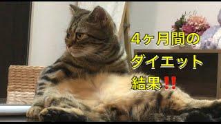 4ヶ月間の猫ちゃんの食事ダイエットの成果は!?