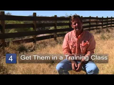 how to train dog not to whine