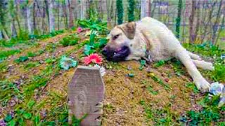 A Stranger Noticed A Dog Alone At A Grave And Solved A Town Mystery