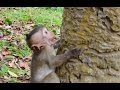 So pity ! Little baby Brutus Jr lost young mom scare much| Brutus Jr cry loudly call young mom back.