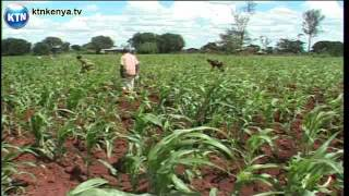 Improving Small Scale Agriculture In Kenya