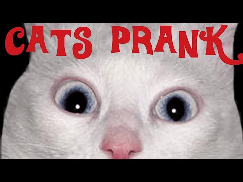 FUNNY CATS - TRY TO PRANK MY CATS...PRANKS GOES WRONG... REALLY FUNNY...