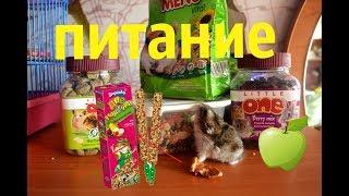 Питание хомяка♡♡♡Чем кормить джунгарского хомяка???