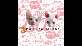 Sphynx cat breeder [breed with love]