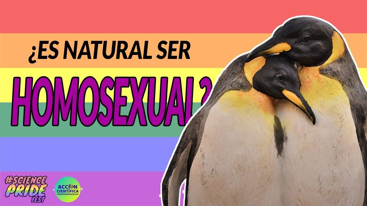 ¿Qué nos dice la biología sobre la homosexualidad?