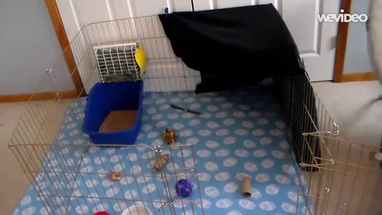 how to set up a rabbit cage   youtube