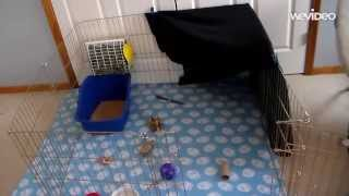 How To Set Up A Rabbit Cage