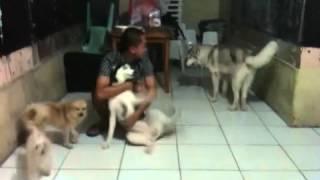 Siberianhusky, Maltese, Zitshu, Pomeranian