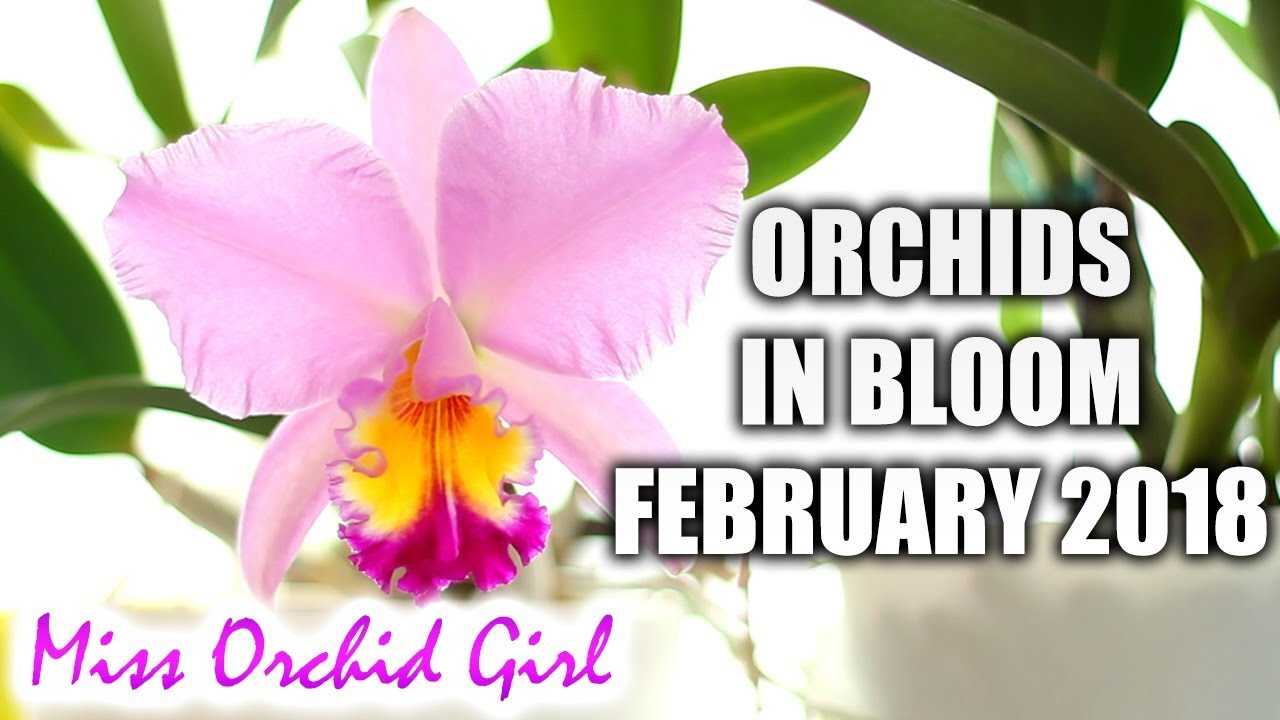 Orchids In Bloom February 2018 Youtube