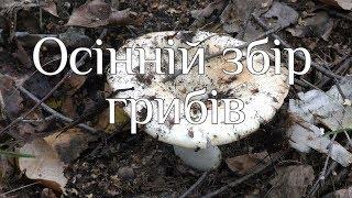 Осінній збір грибів