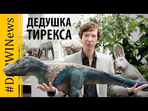 Происхождение Тираннозавра и другие новости. Ярослав Попов #DARWINews