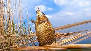 ПРОХОДИМЕЦ-ХИТРАЯ СНАСТЬ на КАРАСЯ!!! СМОТРЕТЬ до КОНЦА!!! Рыбалка на Поплавок!