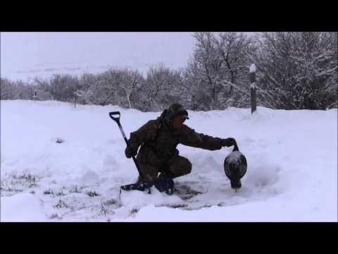 How To Hunt Turkeys In The Snow - Mark Kayser