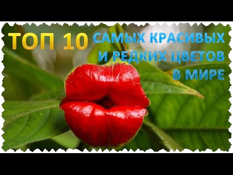 ТОП 10 Самых красивых и редких цветов в мире