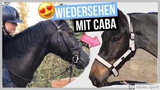CABA KOMMT ZU BESUCH - wiedersehen nach dem VERKAUF 😍! |  FMA am Stall + Novi reiten 😁⭐️