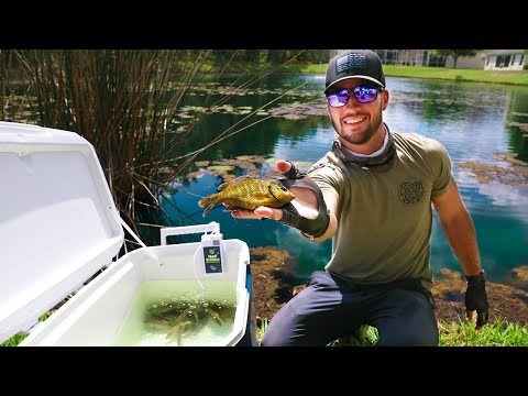 """Transporting Bass CANDY with Homemade Livewell!! (Pond Rescue) """"Jiggin with Jordan"""""""