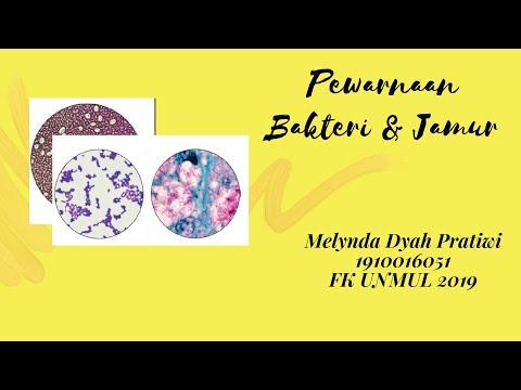 1910016051 - Melynda Dyah Pratiwi -Video Tutorial Praktikum Mikrobiologi Pewarnaan Bakteri Dan Jamur