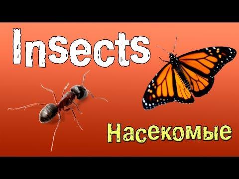 Как по английски будет насекомое