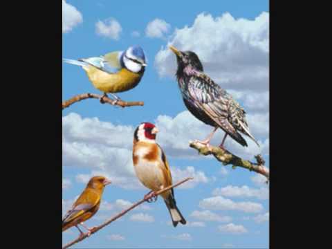 Les oiseaux du monde si tu me vois chanter c te d for Les pachas du canape vert