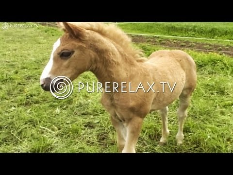 Relaxation For Children - Quiet, Music for Learning, Harmony & Positive - CUTE FOALS