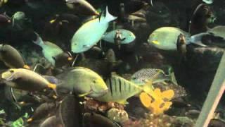Ocean Park, Manila Video #6
