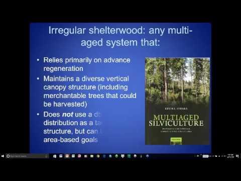 Exploring Silvicultural Strategies in Northern New England – Irregular Shelterwood