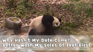 Ying Ying: Why Hasn't My Date Come? Better Wash My Soles Of Feet First | iPanda