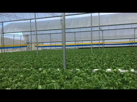 Hydroponics farm in Cameron highlands - Malaysia