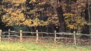 Охотник на лис дублированный трейлер