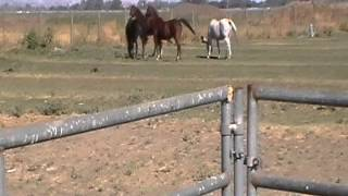 Moving Cattle - Pressure & Release - Horse Herd - Draw Interfering Part 1 - Rick Gore Horsemanship