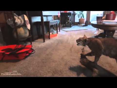 Scared Cats Compilation 2014 part 1